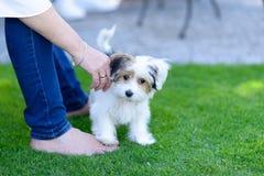 Piccolo cucciolo sveglio sull'erba del cortile con il proprietario Fotografia Stock Libera da Diritti