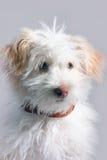 Piccolo doggy immagini stock