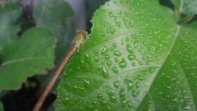 Piccolo drago Fotografia Stock