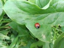 Piccolo e piccolo miracolo in natura fotografia stock