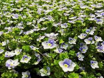 Piccolo fiore immagine stock