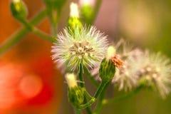 Piccolo fiore immagini stock libere da diritti
