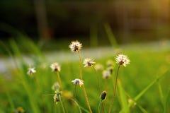 Piccolo fiore con il fondo verde della sfuocatura Fotografie Stock