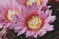 Piccolo fiore dentellare immagine stock libera da diritti