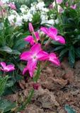 Piccolo fiore dentellare fotografie stock