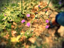 Piccolo fiore dentellare Immagine Stock