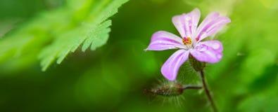 Piccolo fiore di rosa selvaggio Immagine Stock Libera da Diritti