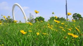 Piccolo fiore giallo che si muove nel vento archivi video