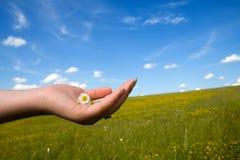 Piccolo fiore prezioso Fotografia Stock Libera da Diritti