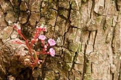 Piccolo fiore rosso della frutta di stella fotografia stock
