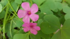 Piccolo fiore viola, macro primo piano Fotografia Stock Libera da Diritti