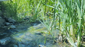 Piccolo fiume al giorno di estate Il primo piano dell'acqua corrente, ha bagnato delle le pietre coperte di muschio Cespugli dell stock footage