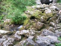 Piccolo fiume in Apuseni Fotografia Stock