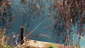 Piccolo fiume che entra nel villaggio archivi video