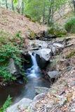 Piccolo fiume con la cascata sugli alberi di un fondo di verde Immagini Stock Libere da Diritti