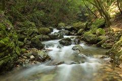 Piccolo fiume con la corrente nella foresta Fotografie Stock