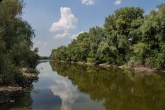 Piccolo fiume con la riflessione e la foresta Fotografia Stock