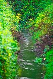 Piccolo fiume con le foglie delle piante variopinte alla conclusione dell'autunno immagine stock