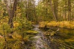 Piccolo fiume della montagna nella Repubblica di Altai, Russia Fotografia Stock