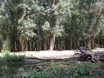 Piccolo fiume in foresta Immagini Stock