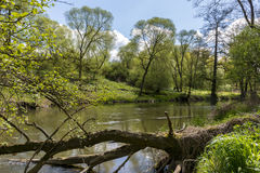 Piccolo fiume nella foresta Immagini Stock Libere da Diritti