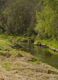 Piccolo fiume nella foresta e nell'erba asciutta fotografia stock