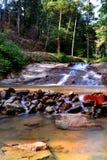 Piccolo fiume nella giungla Immagine Stock Libera da Diritti
