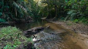 Piccolo fiume nella giungla stock footage
