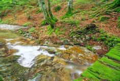 Piccolo fiume nella montagna Fotografia Stock