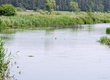 Piccolo fiume in Polonia Fotografia Stock Libera da Diritti