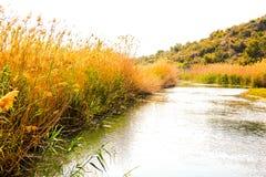 Piccolo fiume in un parco naturale della zona umida fotografie stock