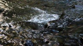 Piccolo fiume veloce video d archivio