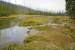 Piccolo fiume in Yellowstone fotografie stock