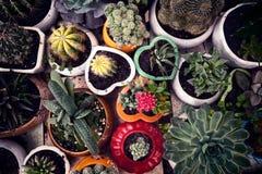 Piccolo fondo conservato in vaso sveglio di vista superiore dei cactus Immagini Stock Libere da Diritti