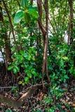 Piccolo fondo della foresta dell'albero fotografia stock