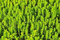 Piccolo fondo delle piante immagini stock