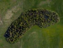 Piccolo foresta - vista del fuco da sopra immagine stock