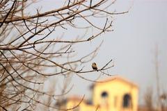 Piccolo formichiere giallo vicino alle tenaglie di Bai fotografia stock