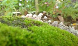 Piccolo fungo Immagini Stock Libere da Diritti