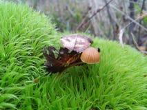 Piccolo fungo Immagine Stock
