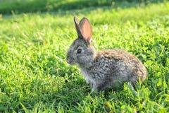 Piccolo funzionamento divertente del coniglio sul campo fotografie stock libere da diritti