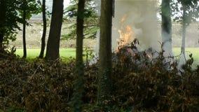 Piccolo fuoco fra gli alberi video d archivio
