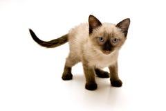 Piccolo gattino fotografie stock