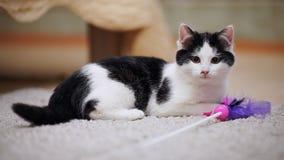 Piccolo gattino immagine stock