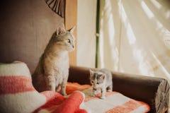 Piccolo gattino Fotografie Stock Libere da Diritti