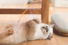 Piccolo gattino Immagini Stock Libere da Diritti