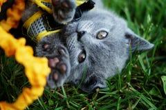 Piccolo gattino Immagini Stock