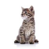 Piccolo gattino adorabile a strisce Fotografia Stock Libera da Diritti