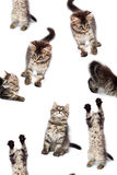Piccolo gattino allegro immagini stock