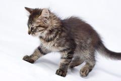 Piccolo gattino allegro Immagine Stock Libera da Diritti